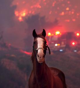 Smoke in Horses